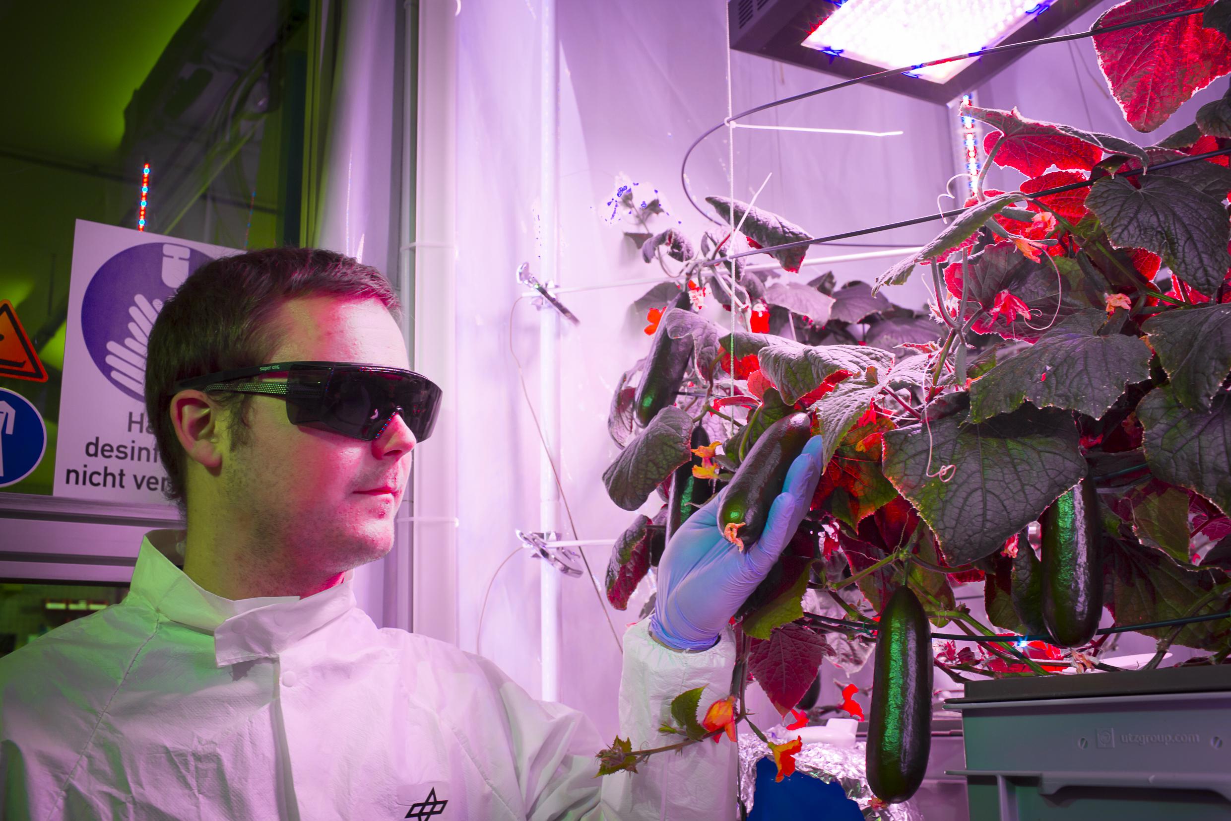 Paul inspecting cucumbers
