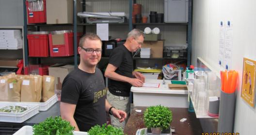 Paul weighting lettuce heads