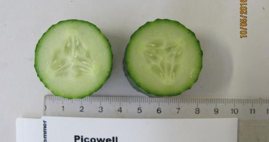 Cucumber cut