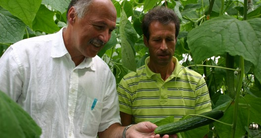 Tom Dueck and a colleague checking cucumber plants