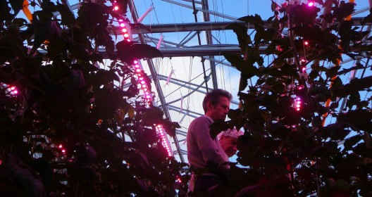 LED lighting in a research greenhouse