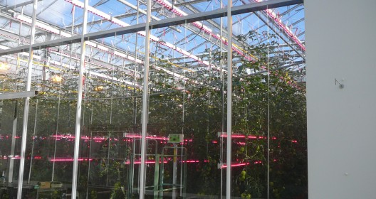 Research greenhouse at Wageningen UR