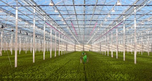 Research greenhouse at Wageningen UR